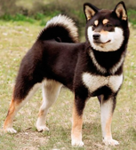 Example of the black and tan coat color